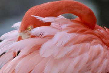 Flamingo Gardens Admission in Fort Lauderdale with Wildlife Tram Ride