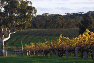 Barossa Valley with Hahndorf Tour from Adelaide