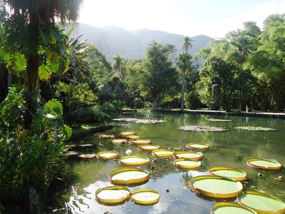 Tijuca Rainforest Jeep Tour with the Botanical Garden