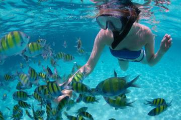 Snorkel Cruise from Montego Bay