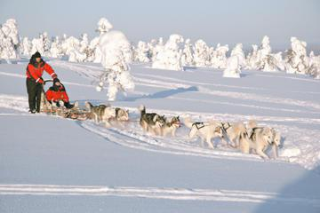 Lapland Husky Sled Ride from Levi