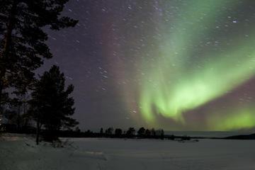 Lapland Northern Lights Adventure from Rovaniemi