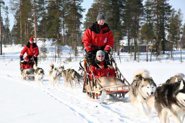 Lapland Christmas Family-Friendly Husky Sled Ride from Rovaniemi