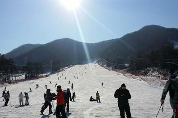 9-Hour Ski Tour to Jisan Ski Resort or Yangji Resort from Seoul