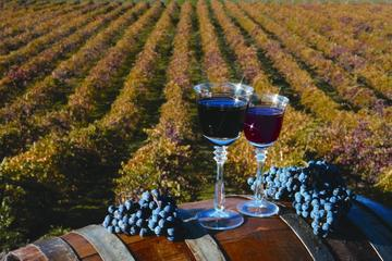 The Ultimate Wine Experience Day Trip to Napa and Sonoma