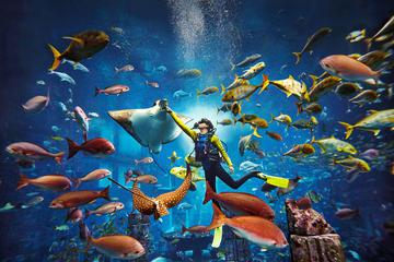 Dubai Atlantis Explorer Certified Scuba Dive