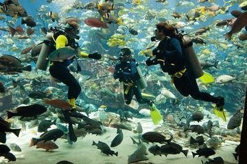 Dubai Atlantis Predator Dive Experience for Certified Divers