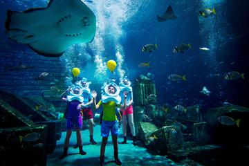 Dubai Atlantis Shark Safari Experience