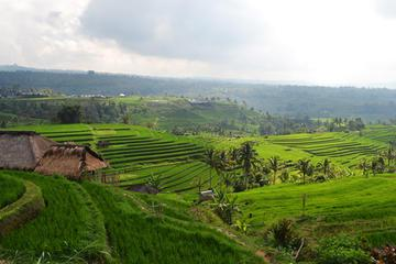 Private Tour: Temple and Countryside Tour from Bali