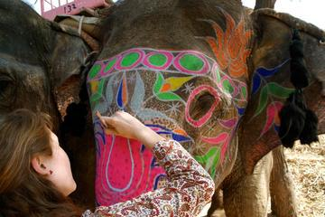 Private Half-Day Tour to The Amber Fort in Jaipur with an Elephant Ride