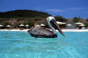 Private Curaçao Beaches Tour Including Kenepa Beach