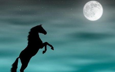 Dubai Mushrif Park Horseback Ride at Full Moon