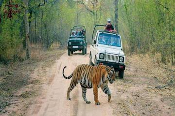 6-Day Private Tour From Delhi to Jaipur includes Ranthambore and Agra Visit