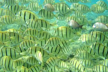 Pelican Rock Snorkeling and Sightseeing Adventure