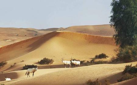 Dubai Desert Half-Day Falconry and Wildlife Safari