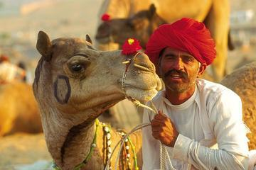 Day Trip to Pushkar from Jaipur