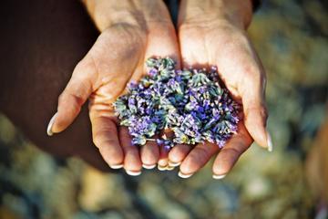 Hvar Lavender Tour
