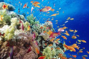 Snorkeling Cruise Mahmaya Giftun Island
