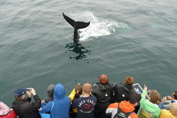 Newfoundland Puffin and Whale Watch Cruise
