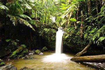 El Yunque Rainforest Hiking Adventure