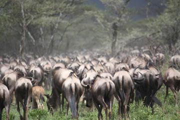 Tanzania 5 Days Private Safari - Wildebeest Migration from Arusha