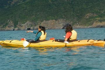 Shore Excursion: Scenic Cruiser Sea Kayaking Safaris in Akaroa