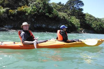 Shore Excursion: Wildlife and Sea Kayaking Safari in Akaroa