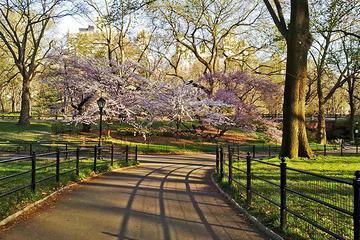 Central Park Bike Rental