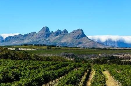 Private Tour: Stellenbosch, Franschhoek and Paarl Wine-Tasting Tour from Cape Town