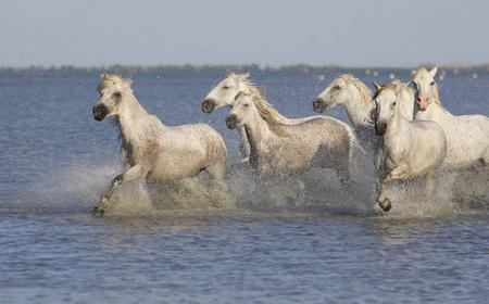 Camargue Full-Day Experience