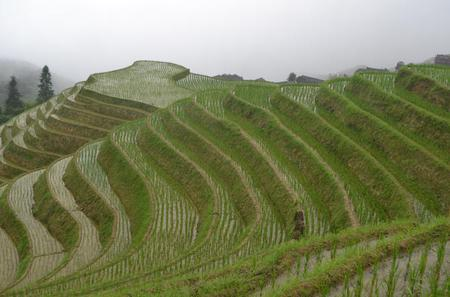One Day Private Longshen Rice Terraces Tour Including Lunch