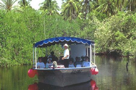 Mazatlan Shore Excursion: Estero Ecological Reserve Jungle Tour