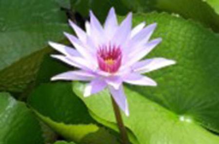 Grand Cayman Shore Excursion: Queen Elizabeth II Botanical Park