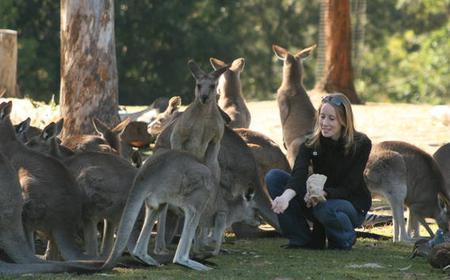 Brisbane Koala and River Cruise