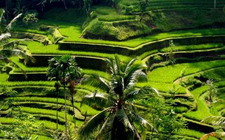 Bali: Ubud Rice Terraces, Temples and Volcano Tour