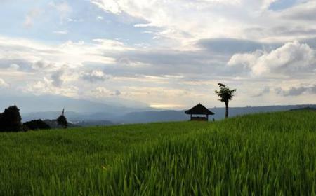 North Bali Full Day Private Tour