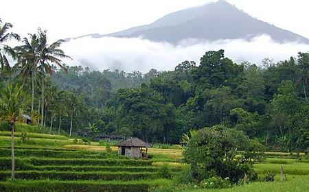 Bali: Jatiluwih Rice Terraces and Mount Batukaru Day Trip