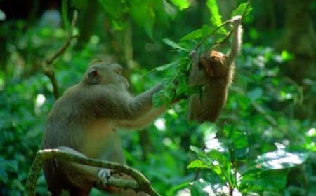 Ubud, Monkey Forest & Singapadu Private 5-Hour Tour