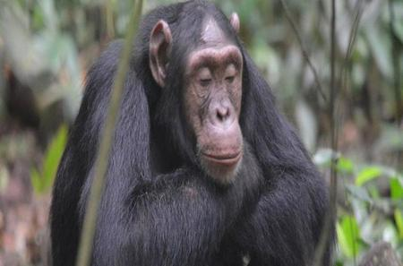 Uganda Kibale Forest National Park: Guided Hiking Day Tour from Kampala