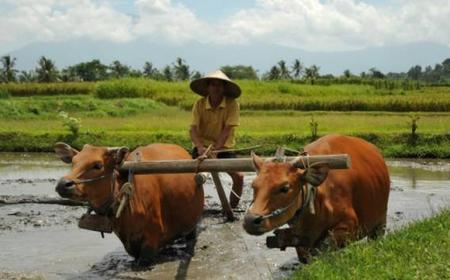 Bali Local Life: Private 6-Hour Tour
