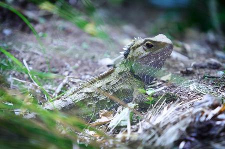 Tuatara Wetlands Tour at Sanctuary Mountain