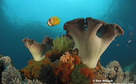 Best of Bali Dive Safari 7 Days / 6 Nights / 11 Dives