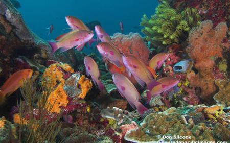 Best of Bali Dive Safari 13 Days / 12 Nights / 27 Dives