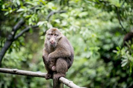 Full-Day Matang Wildlife And Trekking At Kubah With Lunch from Kuching