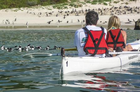 Kayak Trip to the Boulders Penguins from Simon's Town