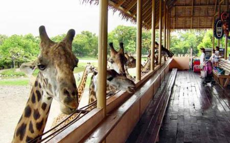 Bangkok Safari World Full-Day Entrance Ticket