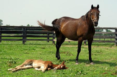 Lexington KY Historic Horse Farm Tour