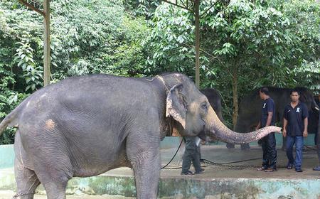 Ganztägiger Ausflug Batu Höhlen und Elefanten-Reservat