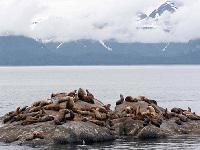 Kenai Fjords Afternoon Wildlife Cruise