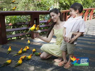 Singapore Jurong Bird Park Tour with Hotel Pick-Up